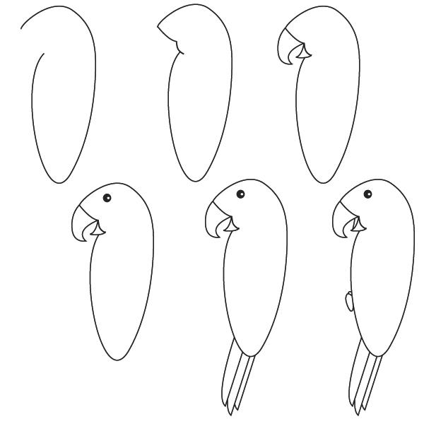 Dessiner un oiseau - Animal a dessiner ...