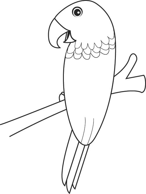 Coloriage Perroquet