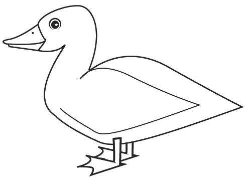 coloriage canard