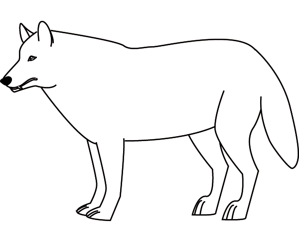 Coloriage loup - Photo de loup gris a imprimer ...