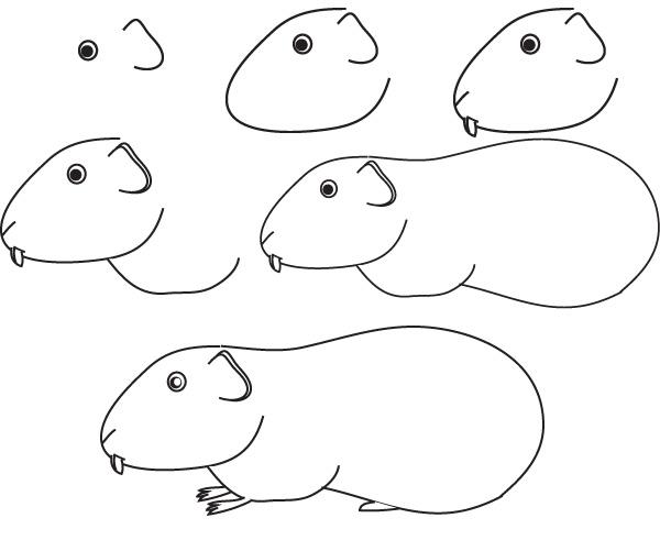Realistic pig drawing - Dessin cochon ...