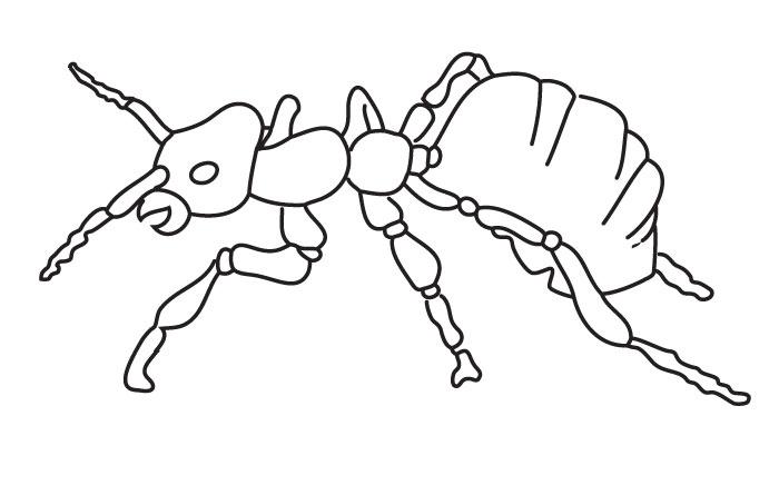 Coloriage fourmi - Dessin de fourmi ...