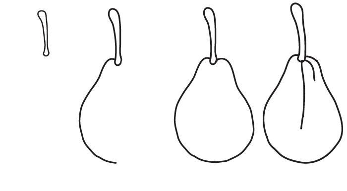 dessin poire