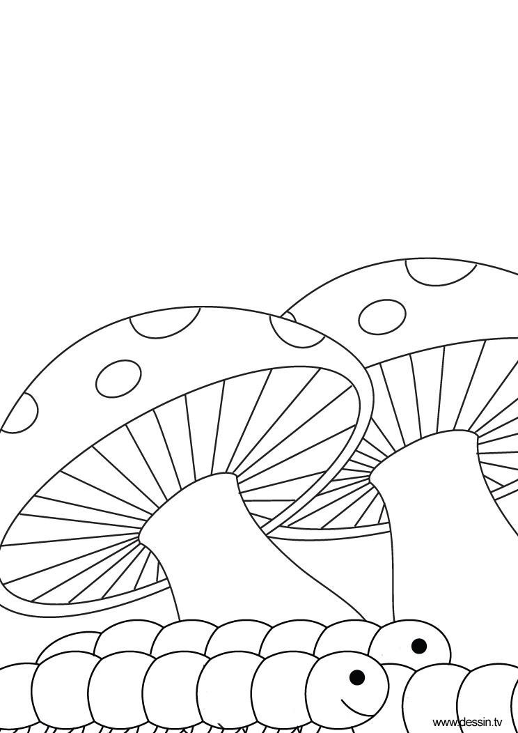 coloriage chenille