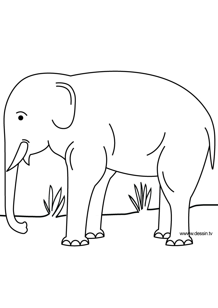 coloriage elephant