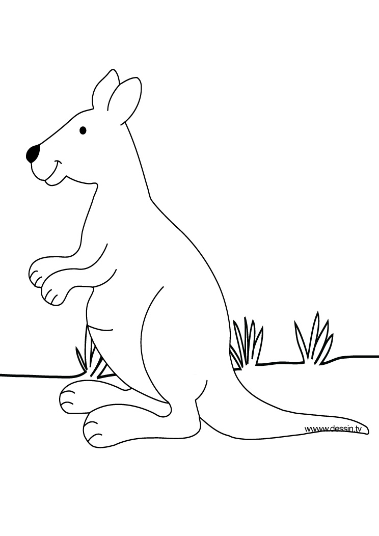 coloriage kangourou