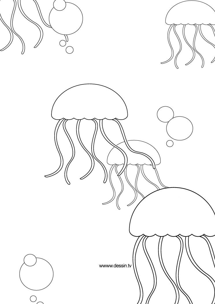coloriage meduse