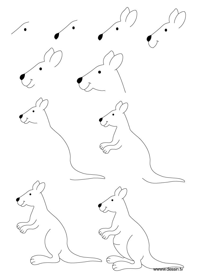 Apprendre a dessiner un kangourou - Animal a dessiner ...