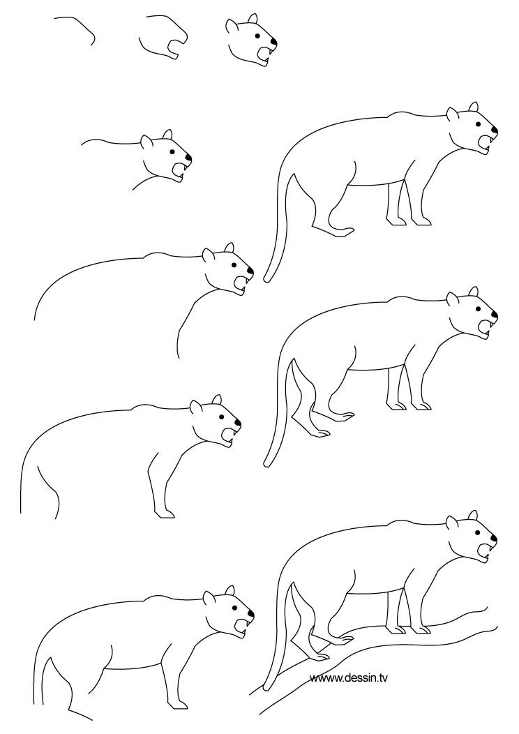 dessin pantere