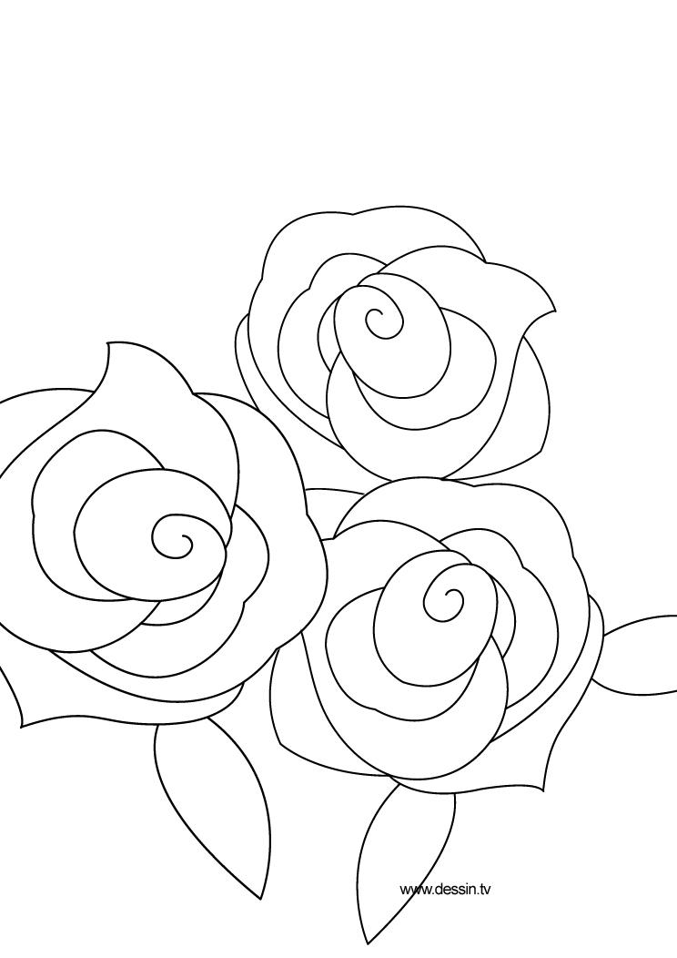 Coloriage rose - Rose coloriage ...