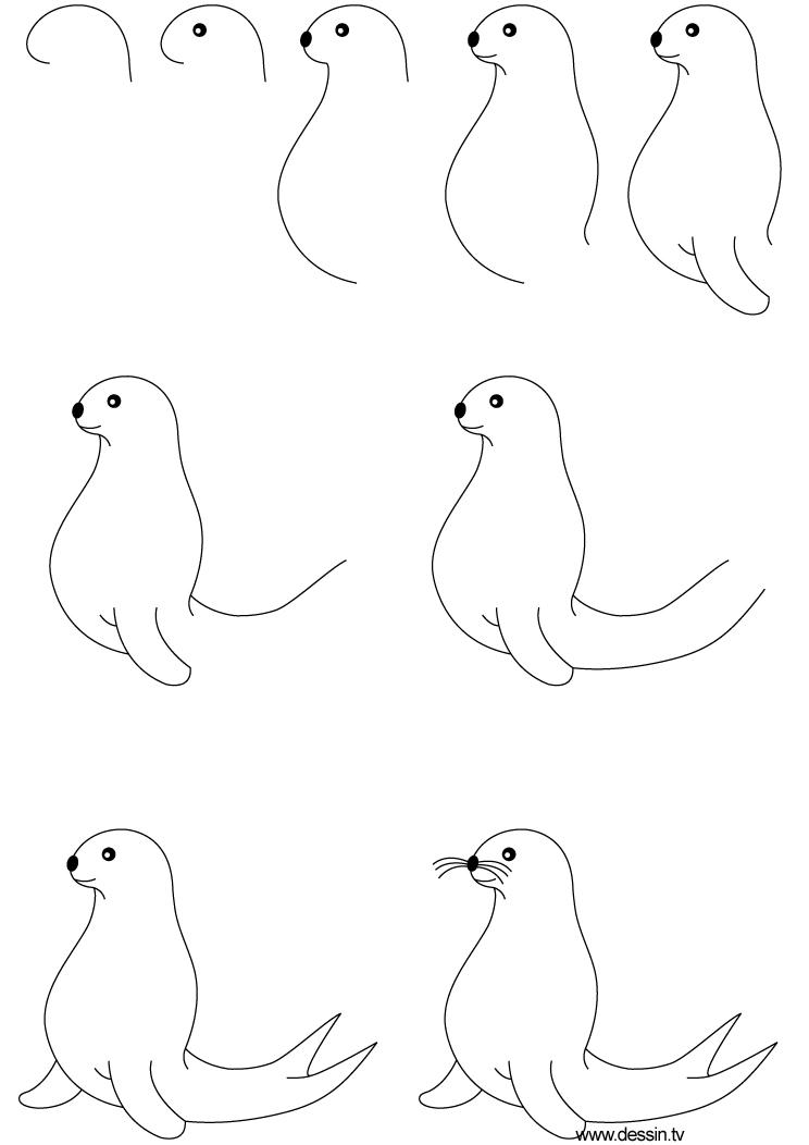 dessin phoque