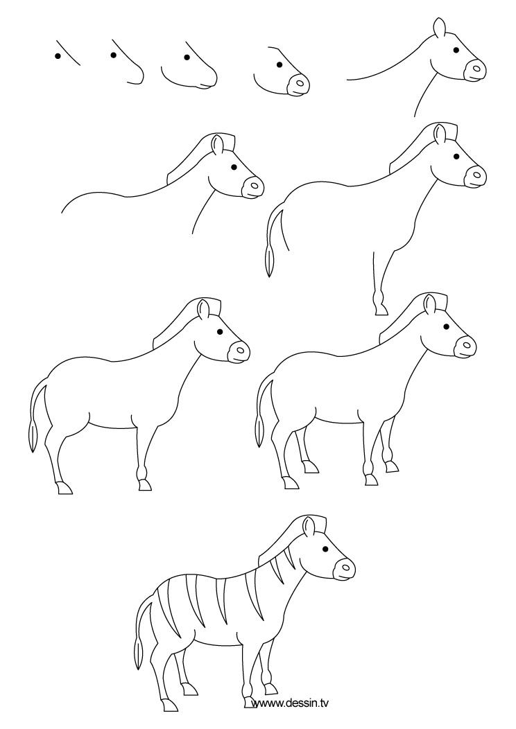 dessin zebre