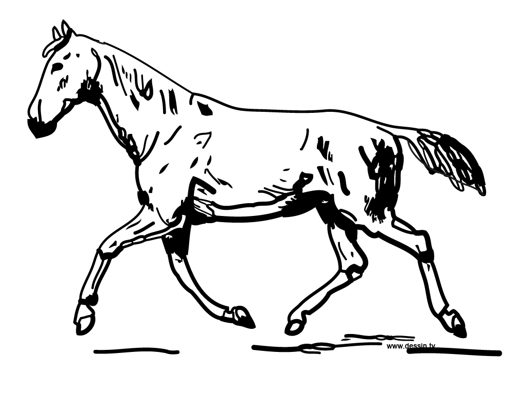 coloriage cheval au trot