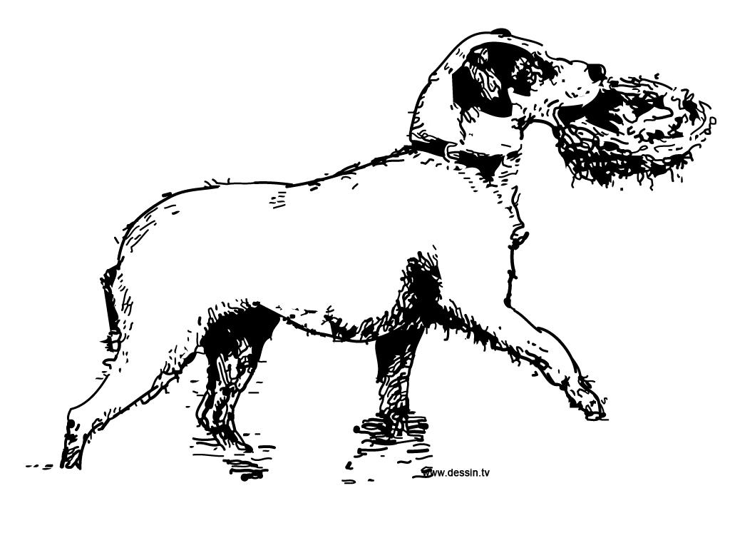 coloriage chien-qui-porte-un-nid