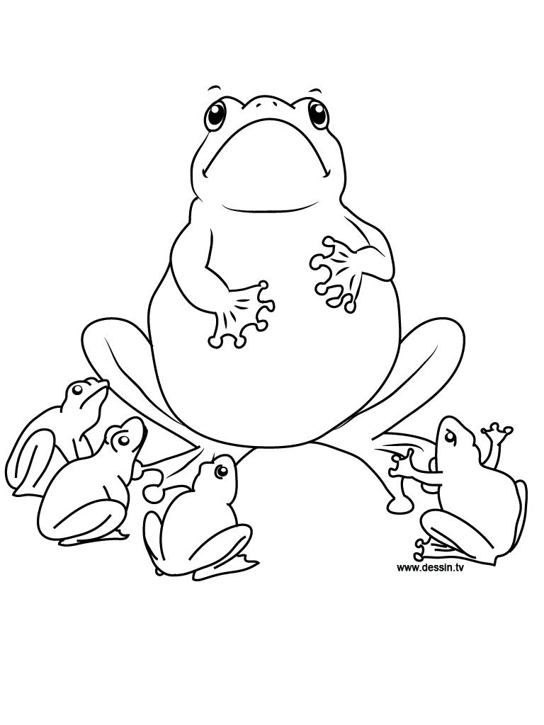 coloriage école-des-grenouilles