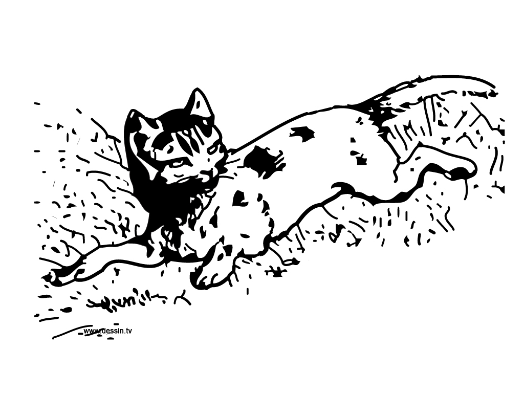 Coloriage petit chat allong dans l herbe - Petit chat dessin ...