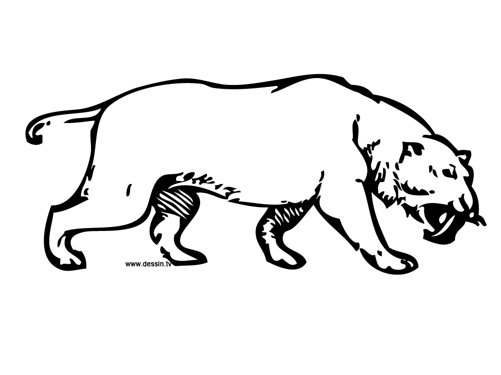 coloriage tigre-à-dents-de-sabre