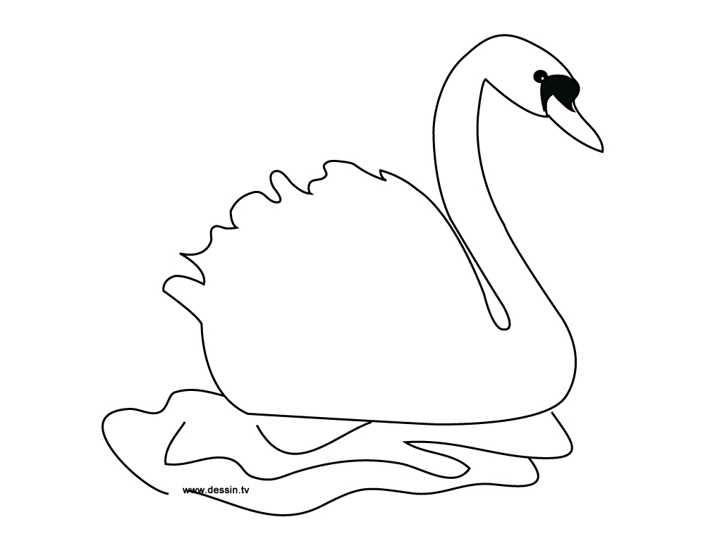 coloriage cygne