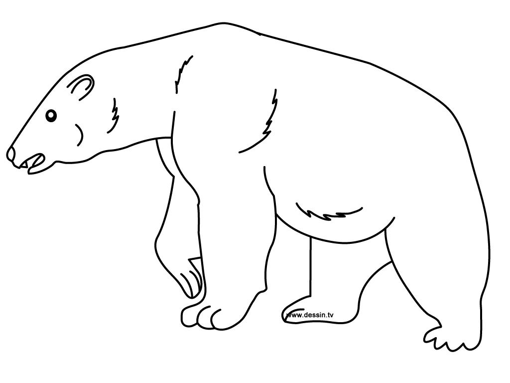 Coloriage ours polaire - Comment dessiner un ours ...