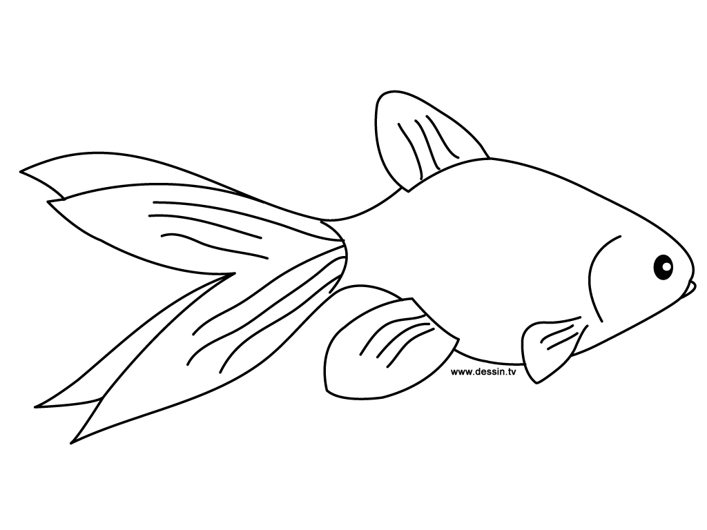 Coloriage poisson rouge for Aquarium poisson rouge dessin