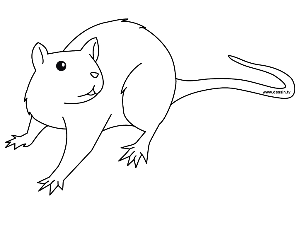 coloriage rat