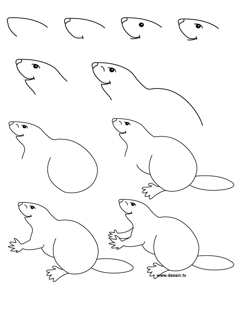 dessin castor