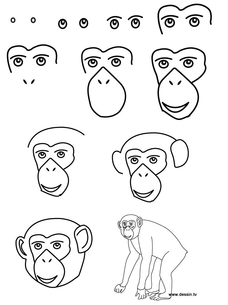 dessin chimpanzé