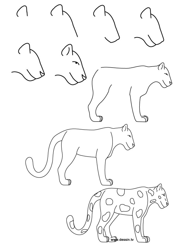 dessin jaguar