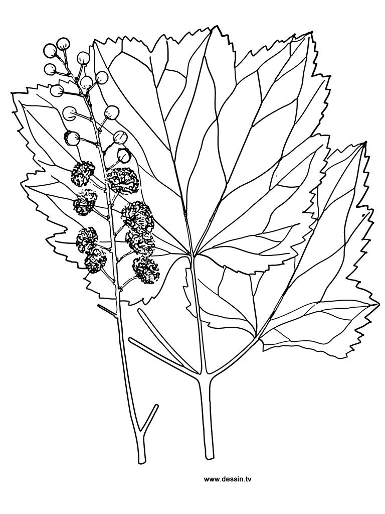 coloriage feuilles-d'automne