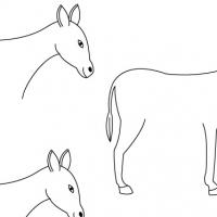 Dessin âne