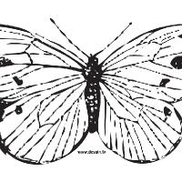 Coloriage papillon aux ailes écartées