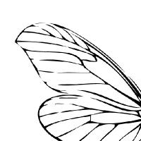 Coloriage ailes de libellule