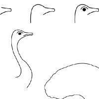 Dessin perroquet - Autruche dessin ...