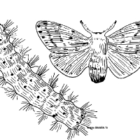 Coloriage chenille et papillon