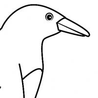 Coloriage pingouin
