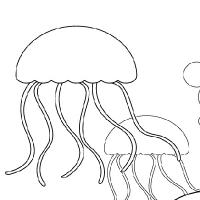 Coloriage méduse