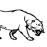 Coloriage tigre à dents de sabre