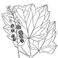 Coloriage feuilles d'automne