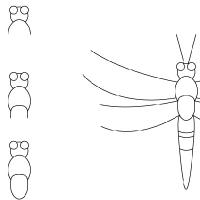 Dessin libellule
