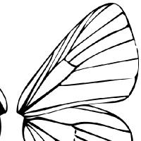 Coloriage ailes de fées