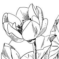Information about le site des dessins et coloriages - Coloriage fleur de lotus ...