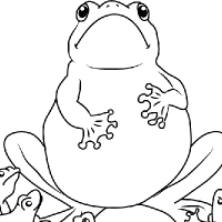 Coloriage école des grenouilles